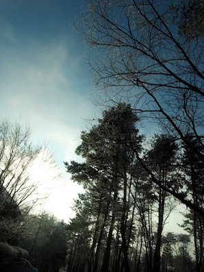 寒い冬の朝